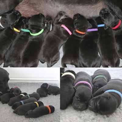 4 My Pets Ошейники для определения щенков Puppy ID (фото, вид 1)