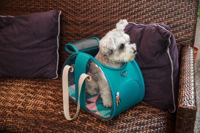 Ibiyaya Складная сумка-переноска для собак и кошек до 6 кг прозрачная/бирюзовая (фото, вид 5)