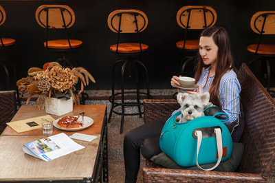 Ibiyaya Складная сумка-переноска для собак и кошек до 6 кг прозрачная/бирюзовая (фото, вид 15)