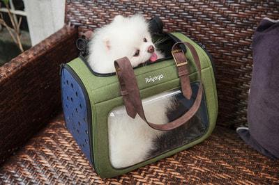 Ibiyaya Складная сумка-переноска для собак и кошек до 6 кг прозрачная/зеленая (фото, вид 10)