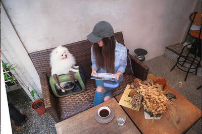 Ibiyaya Складная сумка-переноска для собак и кошек до 6 кг прозрачная/зеленая (фото, вид 11)