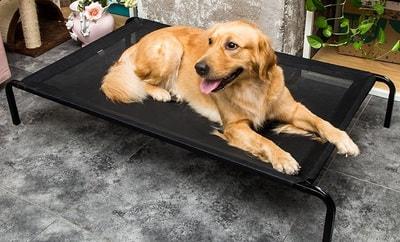 Lion Лежак-топчан для крупных пород собак черного цвета (фото, вид 2)
