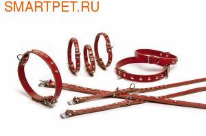 I.P.T.S./Beeztees Ошейник кожанный красный с заклепками (фото, вид 1)