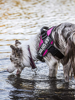 JULIUS-K9 Шлейка для собак IDC®-Powerharness, темно-розовый (фото, вид 1)