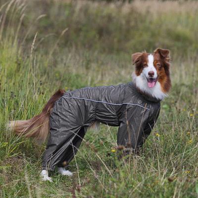 OSSO Дождевик для крупных пород собак Принт c голубым/низ черный на мальчика (фото, вид 2)