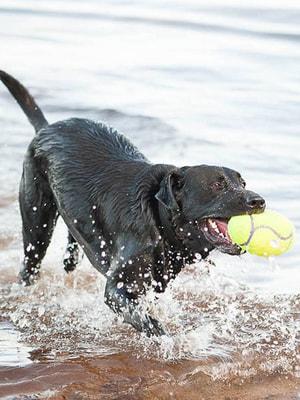 Kong Игрушка для собак Air Регби на основе теннисного мяча (фото, вид 2)