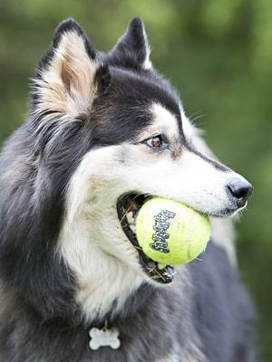 Kong Игрушка для собак Air Теннисный мяч большой (в упаковке 2 шт.) (фото, вид 2)