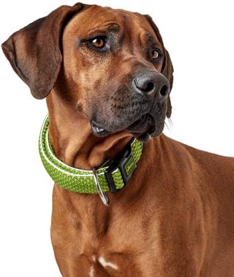 Hunter Ошейник для собак Hilo Vario Basic, сетчатый текстиль, лайм (фото, вид 3)