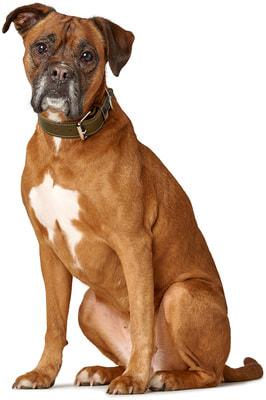 Hunter Ошейник для собак Aalborg special кожа, оливковый (фото, вид 4)