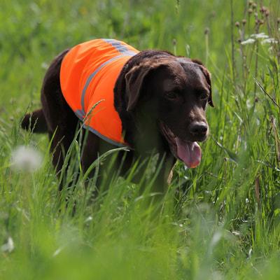 OSSO Fashion Сигнальная попона для собак (фото)