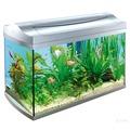 Tetra AquaArt LED Tropical аквариумный комплекс с LED освещением, белый