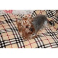 Бобровый дворик Плед для собак и кошек Шотландка светлая