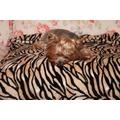 Бобровый дворик Плед для животных Тигр