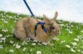 Beeztees Шлейка с поводком для кроликов нейлоновая