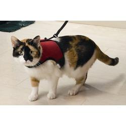 I.P.T.S./Beeztees Шлейка для кошек с поводком и колокольчиком